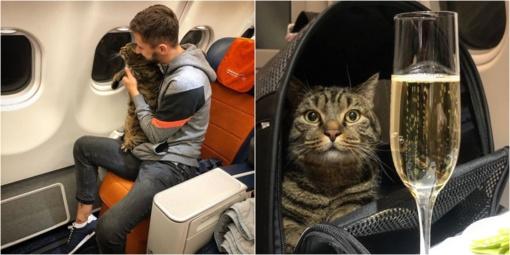 Rusas buvo nubaustas už bandymą į lėktuvo kabiną įsinešti nutukusį savo katiną