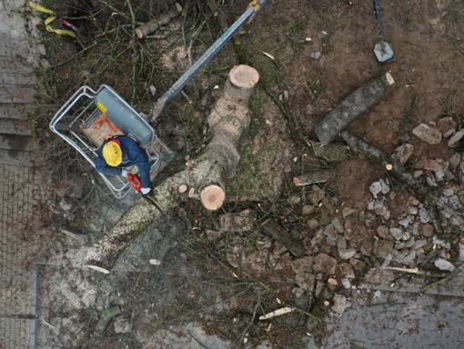 Pilies parke darbuojasi medžių pjovėjai