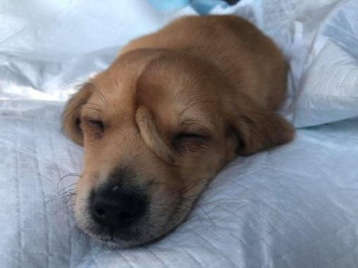 """""""Šunelis vienaragis"""" – išskirtinės išvaizdos mažylis sužavėjo pasaulį (vaizdo įrašas)"""