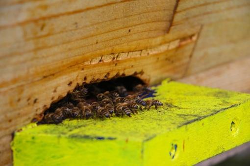 Prienų rajone sugadinta dešimt bičių avilių, nuostolis – 1 700 eurų