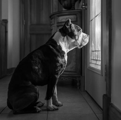 Klaipėdoje pavogtą šunį policininkai grąžino šeimininkui