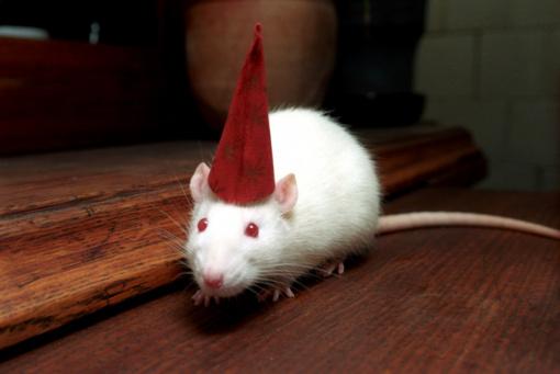 2020 metų astrologinė prognozė: atkeliauja Metalinė baltoji žiurkė