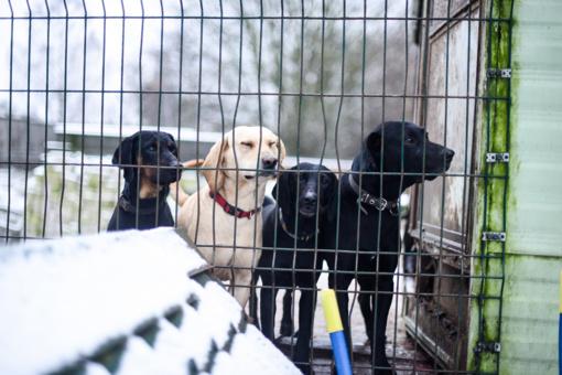 Beglobiai gyvūnai laukia kalėdinio stebuklo
