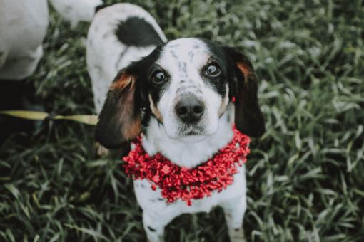 Kalėdų stebuklo laukia BONA