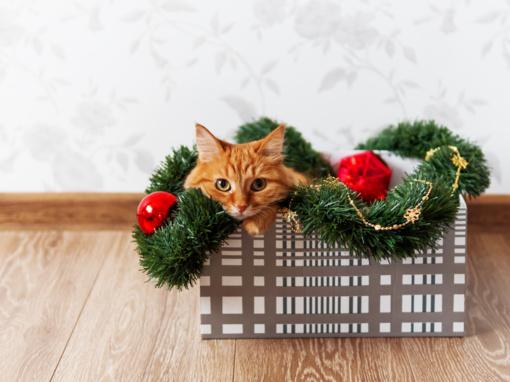Jūsų katė dėžėje? Ji, ko gero, malšina stresą