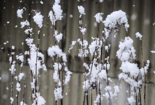 Po lietingų Kalėdų laukus nubalins sniegas