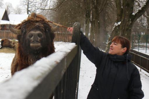 Netektis Kauno zoologijos sode: dvi dienas stumbrė nebepajėgė atsistoti ant kojų