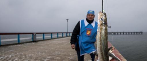 Prasidėjo registracija į stintų žvejojimo varžybas