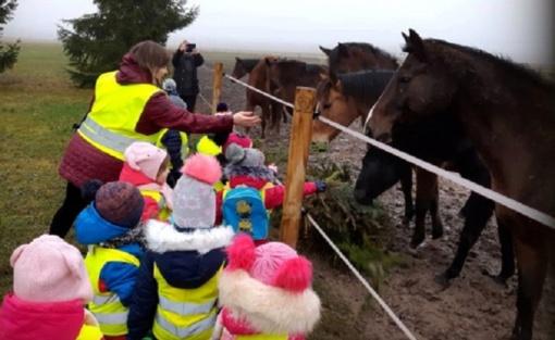 Radviliškyje nupuoštos žaliaskarės – skanėstas žirgams