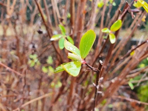 Kokias pasekmes Alytaus augmenijai gali turėti neįprastai šilta žiema?