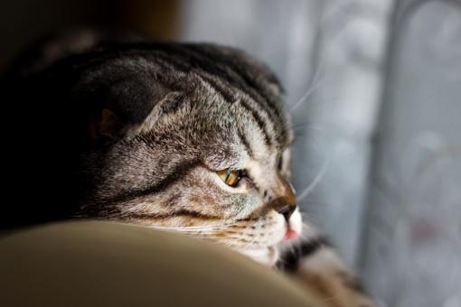 Sužinokite, ką reiškia katės elgesys bei pasirinkta vieta, kai ji atsigula ant žmogaus