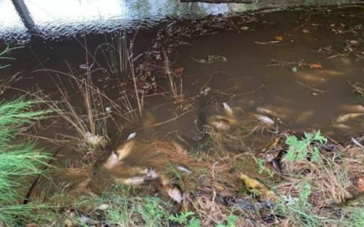 Australijoje lietus gaisrų pelenus nuplovė į upes – masiškai žūsta žuvys (vaizdo įrašas)
