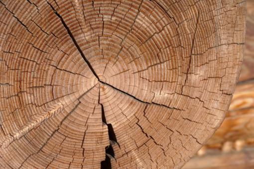 Siūloma, kad pagamintą žaliavinę medieną pirmiausia įsigytų atitinkantys socialinės ekonominės naudos kriterijus