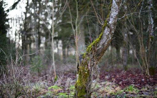 Pareigūnai iš miško nešė paeiti jau nepajėgusį vyrą
