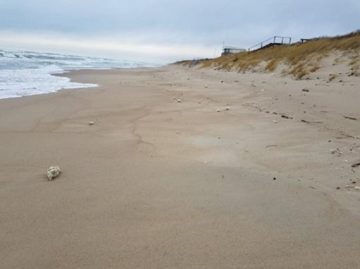 Bus renkamas jūros išplautas parafinas