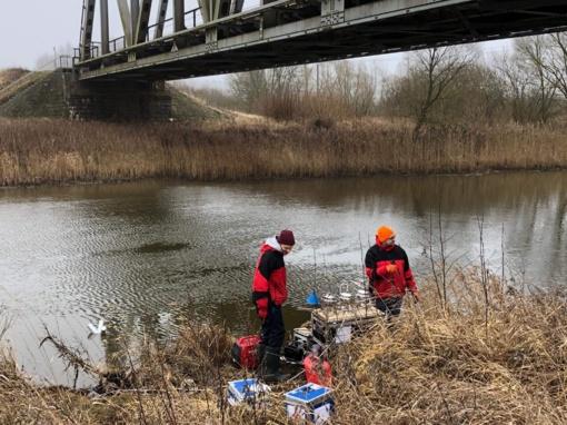 Šiaulių rajone, Ventos upėje pradėti neeiliniai tyrimai