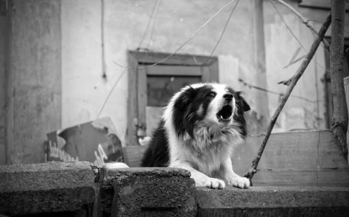 Neatsakingiems šunų savininkams - šimtus eurų siekiančios baudos