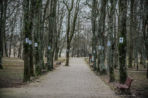 Ant Gargždų parko medžių – protesto kryžiai