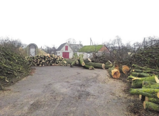 Medžiai iškirsti dėl projekto įgyvendinimo