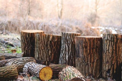 Siūlomos įstatymų pataisos sumažintų statybų ribojimus privačiame miške