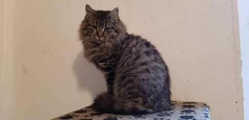 Išskirtinis katukas Vaivorykštis ieško namų