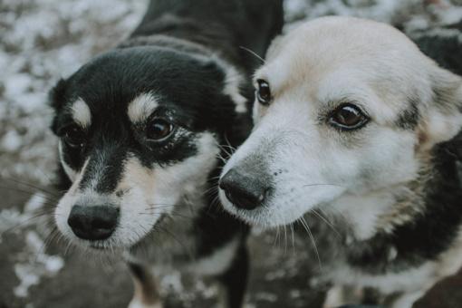 Dvi fainuolės – Dija ir Pinavija – ieško namų