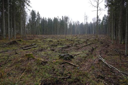 Aplinkos ministerija siūlo kompromisinį Punios šilo apsaugos modelį