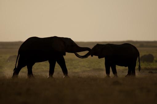 Klimato kaita smogs skaudžiai: iki 2070 m. išnyks trečdalis gyvūnų ir augalų rūšių