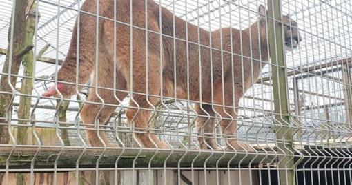 """Zoologijos sodo šeimininkas pratrūko: """"O kas tas gyvūnų teises sugalvojo?"""""""