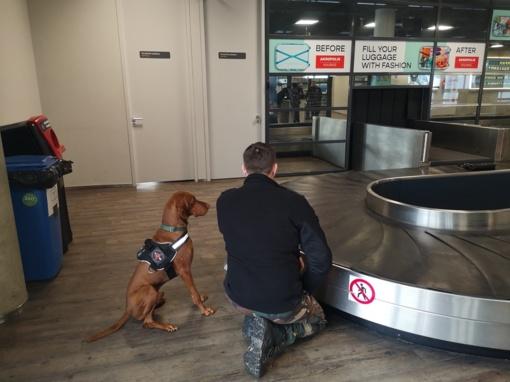 Kauno oro uoste vyksta tarnybinių šunų mokymai