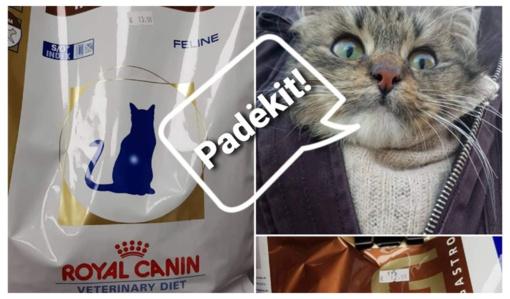"""""""Šiaulių letenėlės"""" kačiukams labai reikia kraiko ir specialaus maistelio"""