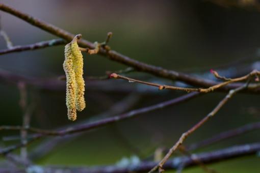 Kuršių nerijoje – pavasario ženklai (nuotraukų galerija)