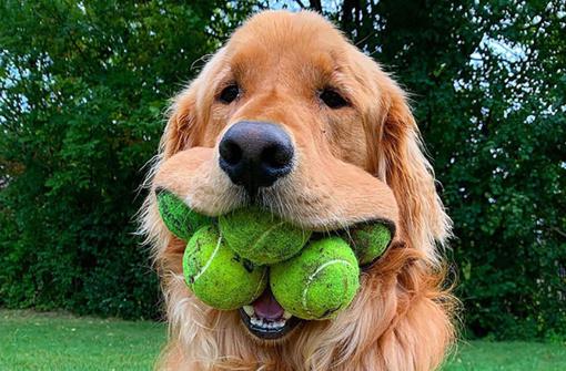 Šuo rekordininkas –  pilna burna teniso kamuoliukų