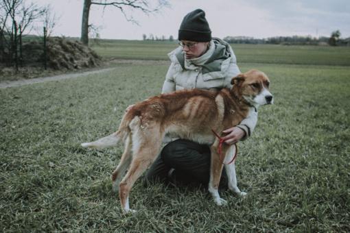 """Šuo marintas badu jėgas atgauna """"Šiaulių letenėlėje"""""""