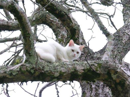 Širvintų rajone ugniagesiai gelbėjo medyje įstrigusį katiną