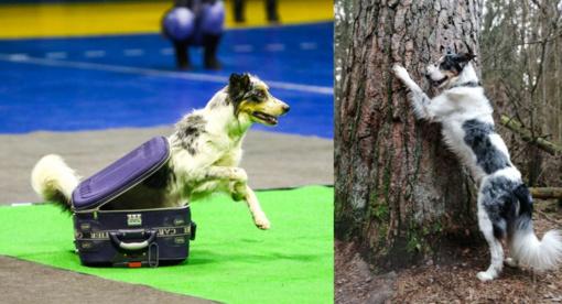 Kauniečiai prašo padėti: Kleboniškio miške dingo šuo – įžymybė