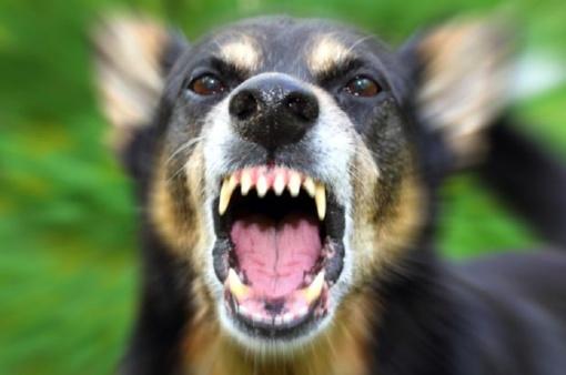 Už šuns sudraskytą stirną gavo įspūdingą baudą