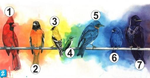 Pasirinkite paukštį ir sužinokite, kokio jausmo jums šiuo metu trūksta