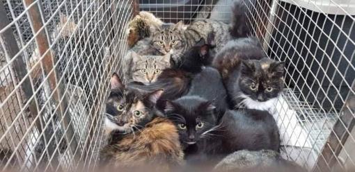 Žmonės, sterilizuokite savo kates!