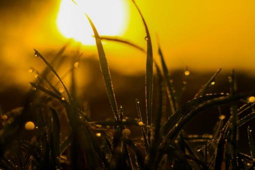 Vasaros pikas prasideda: ar sulauksime karščių?