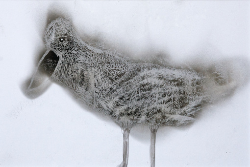 """""""(P)aukštis"""" - Editos Sūdžiūtės mokinių dūmais pieštų paukščių paroda"""