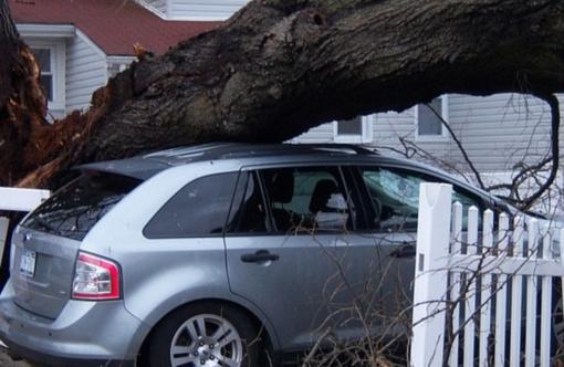 Vilniaus senamiestyje nuvirtęs medis apgadino keturis automobilius