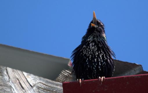 Prasidėjo paukščių tuoktuvės – nedrumskime jiems ramybės