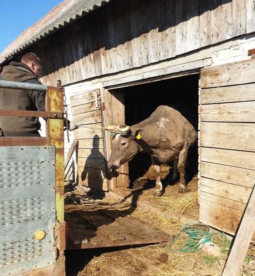 Alytaus rajone pradėtas dioksinais užterštų gyvulių utilizavimas