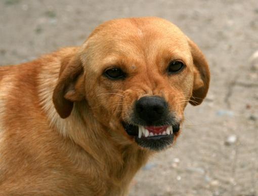 Švenčionių rajone šuo apkandžiojo vaiką