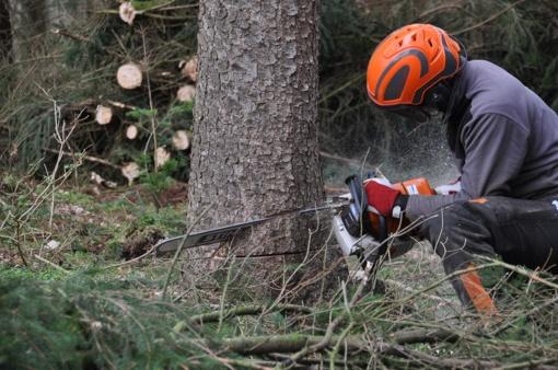 Kėdainiuose bus kertami ir genėjami medžiai