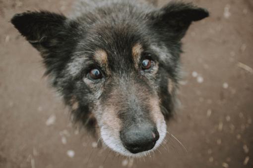 Senolį Merkurijų norėjo iškeisti į jaunesnį šunį