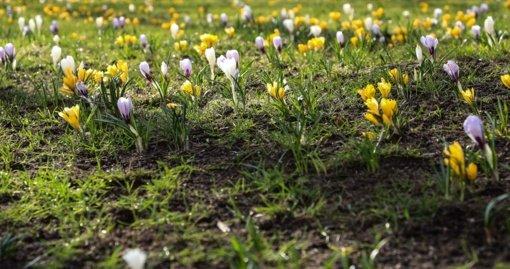 Savaitgalis pradžiugins – šiluma vilios laukan