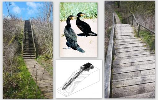 Laikinai uždaromas garnių ir kormoranų kolonijos lankymas