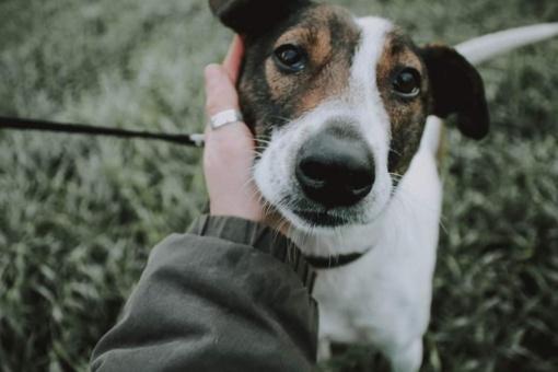 Gradinėms STOP! Padėk išlaisvinti gyvūnus